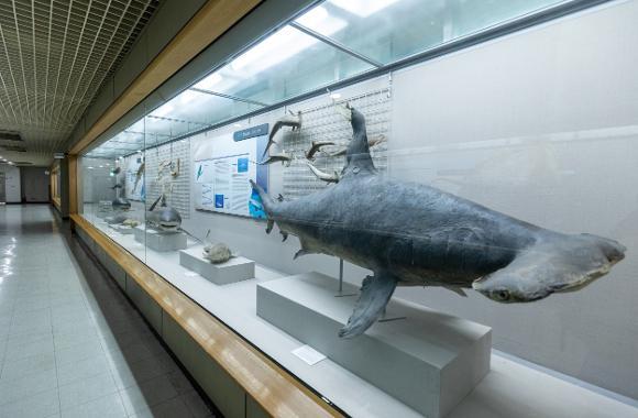 부산해양자연사박물관1