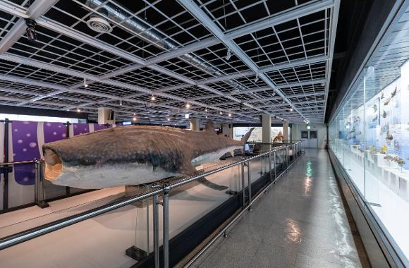 부산해양자연사박물관2
